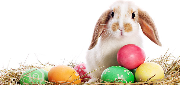 Happy Easter - 5 fun facts!! | adOvation